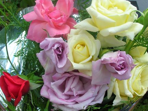 Rosas caseras 1