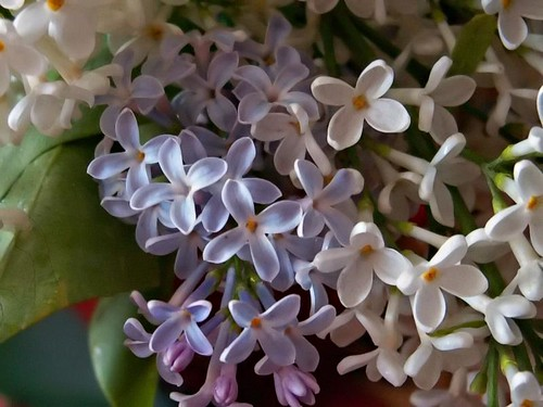 l is for lilac by you.