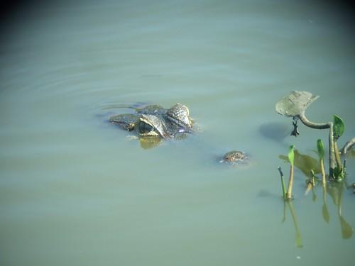 Pantanal, Brasil, 2007.