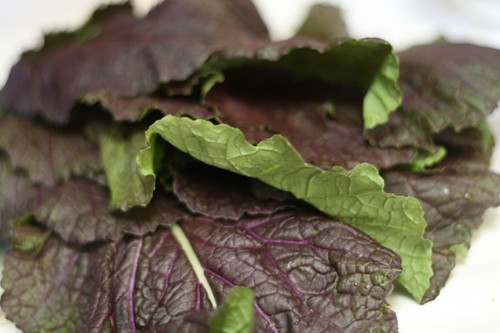 Purple mustard greens