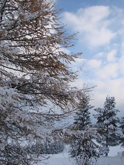 1ères neiges