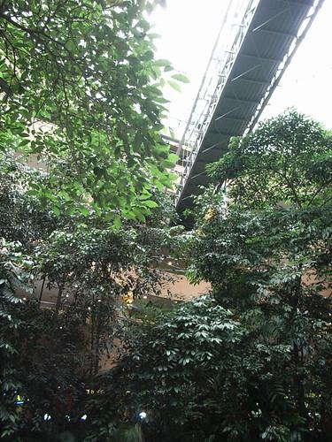 Underneath the Suspension Bridge