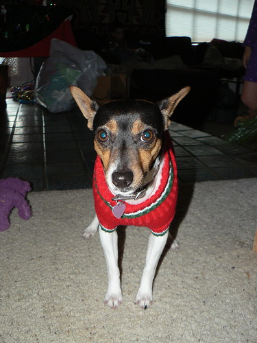 Ruby's Christmas Sweater