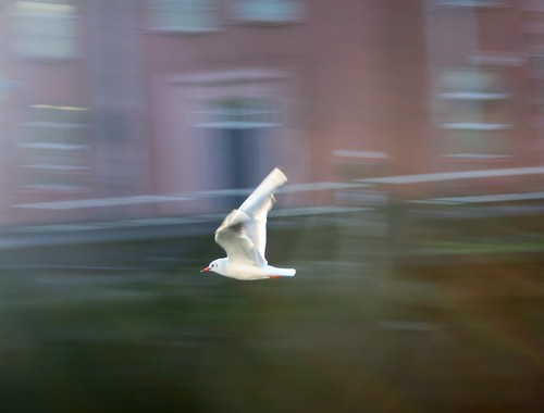 Panning Bird