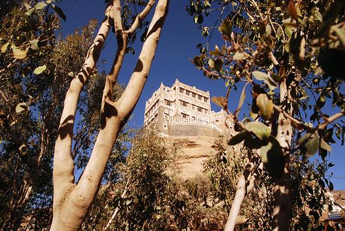 Wadi Dahr khat plantations