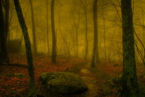 The Misty Woodland Veil