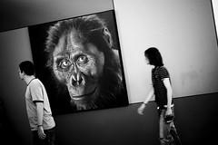 Evoluzione (?)