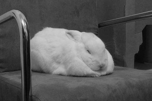 gus napping