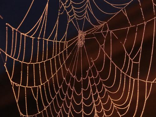 Nature's Netting