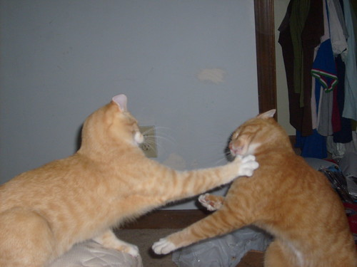 Cat fight 3 aka 'reach out and touch someone you love' by you.