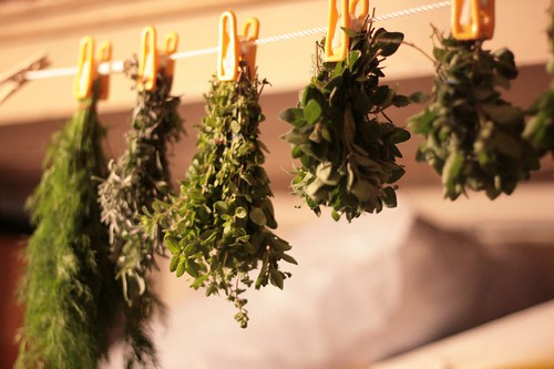 Herbs hanging up to dry on my basement clothesline