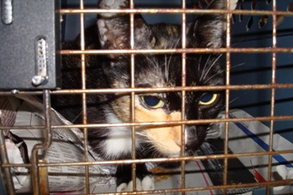 Becky_in_carrier_20080305_06x
