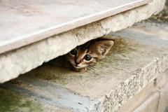 ...non fidarsi è meglio - my scared cat / gatto