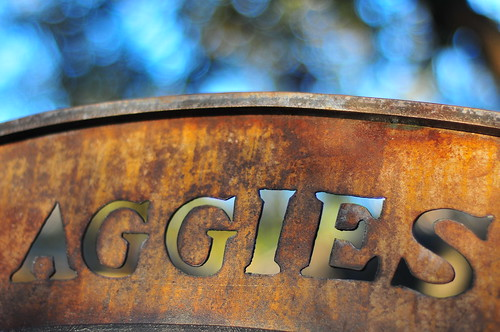 Aggie Bench and Tree Bokeh