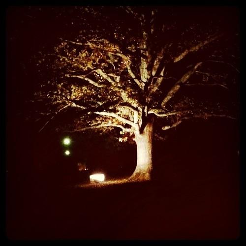 Tree in Braidwood