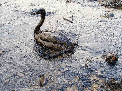 Black Sea Oil Spill
