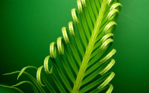 Curls On Green