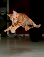 Believe I can Fly
