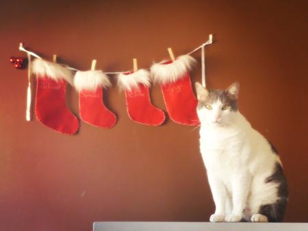 #173 - Christmas Pablo