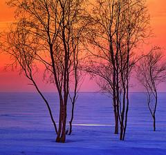 Finland's Winter Seashore at Dusk
