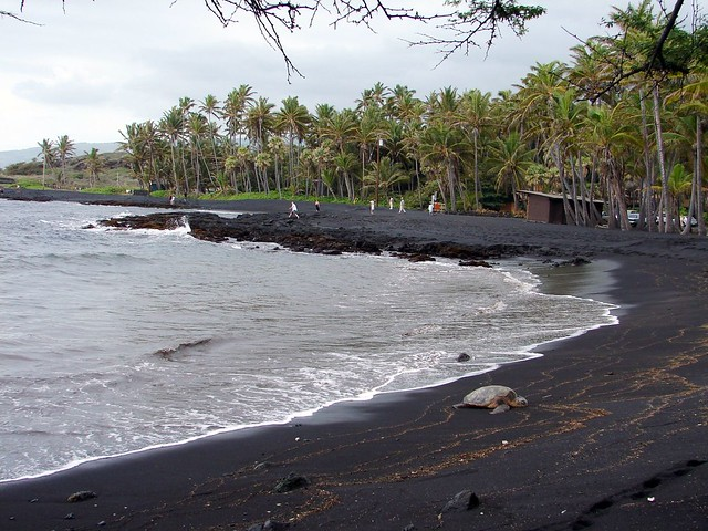 green sea turtle on Punalu'u black sand beach