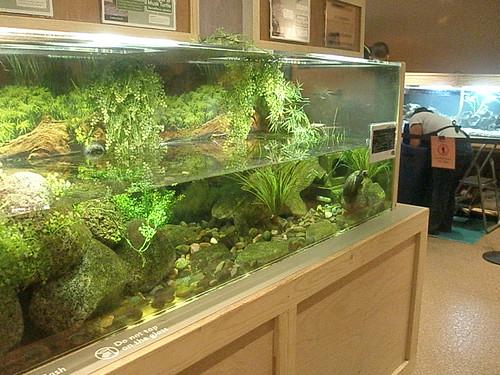 Image Result For Rimless Aquarium
