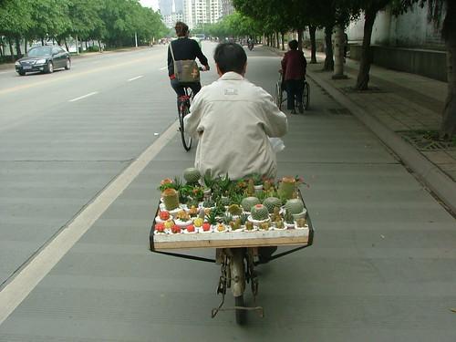 Cacti Transporter