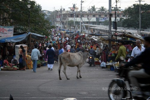 Cow ready for shopping, Navsari, India
