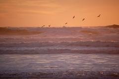 Ocean Beach 8