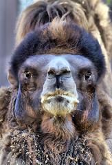 Camel - Eye to Eye