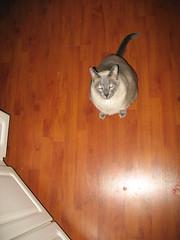 Mamma give me Tuna!!!! 002