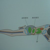 YOGA_鱷魚式(Crocodile Pose; Makarasana)
