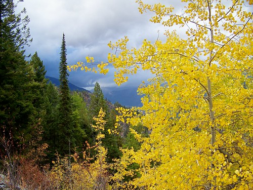 Fall colors, Coeur d'Alene Mountains