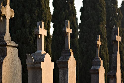 Cruces y cipreses
