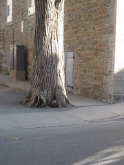 What's in the roots of that tree?