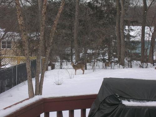 03-08 Deer