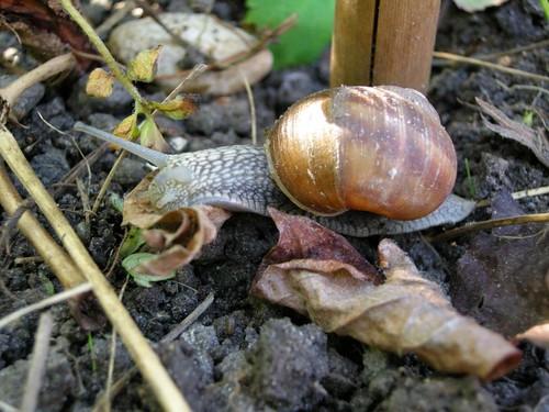 snail1164