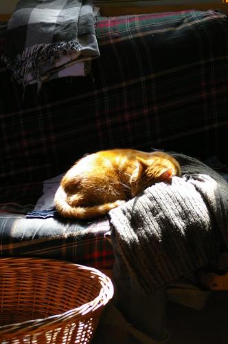 Oscar in the sunlight