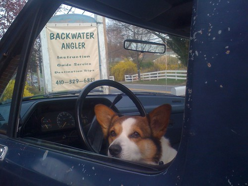 Ella, Backwater Anglers Official Greeter, is ready for the move