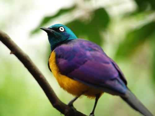 bird_06.jpg