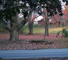leaves_fallen