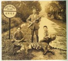 Last wild tiger killed in Choa Chu Kang Village, Singapore, circa 1930