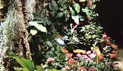 03.29.08 Butterfly Pavilion (12)