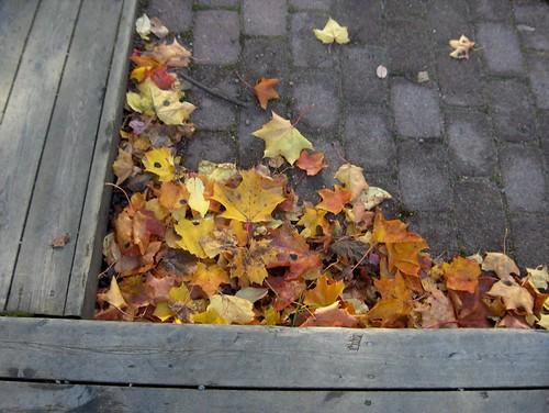 Cornered Leaves in a corner