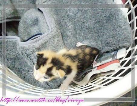 [送養]被遺棄小貓 @VIVIYU小世界