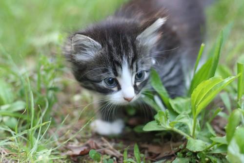 Girl Kitten the Second