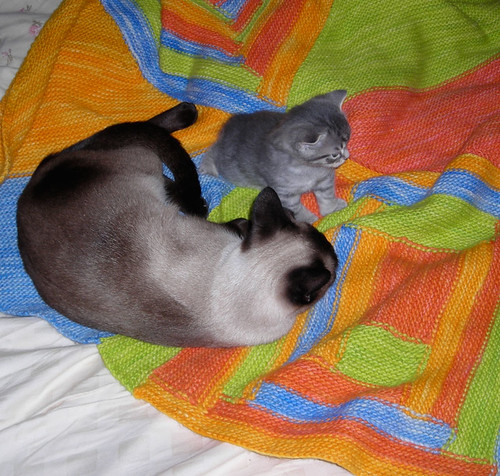 evie & vince on the blanket