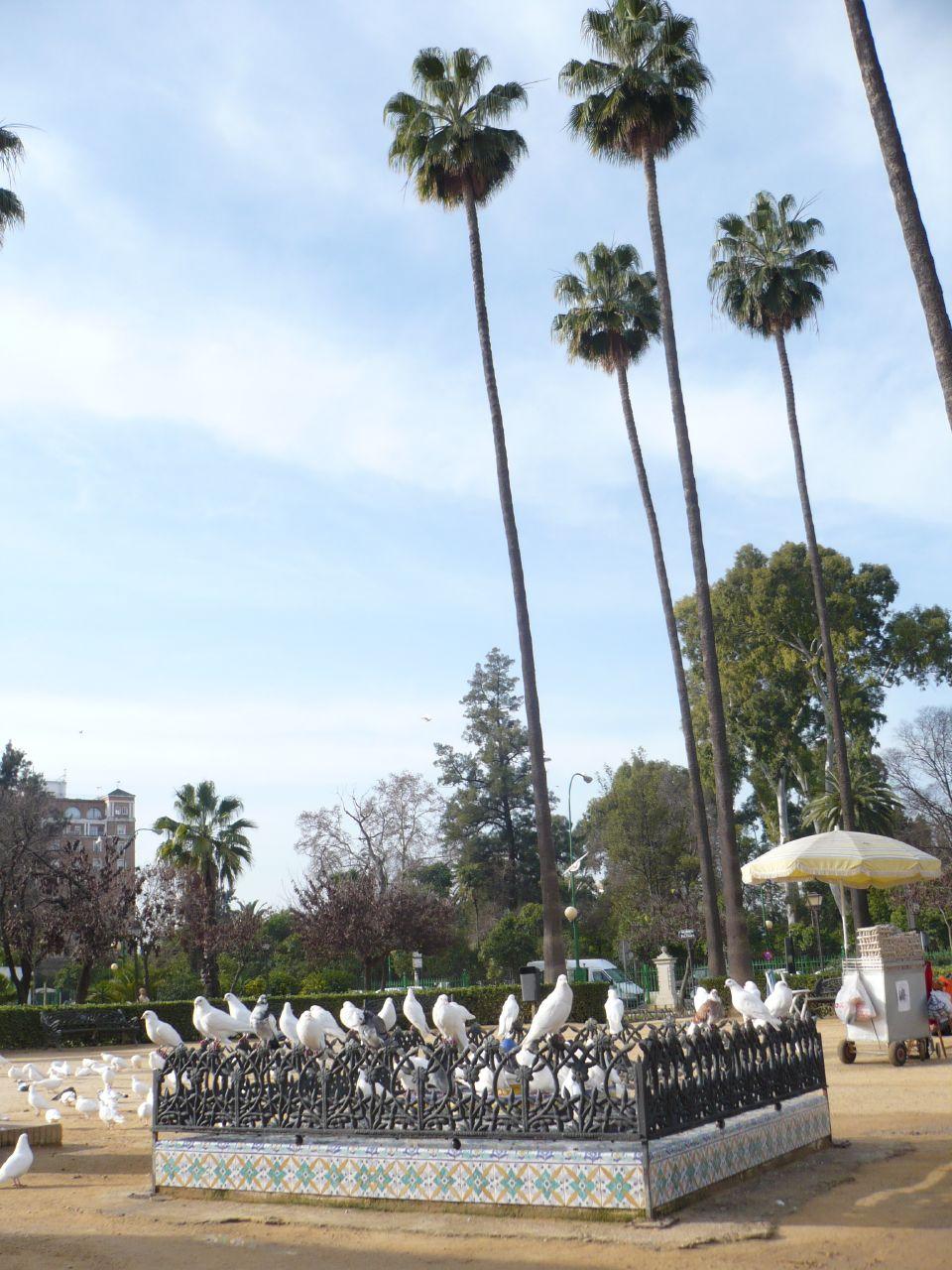 las famosas palomas de la plaza