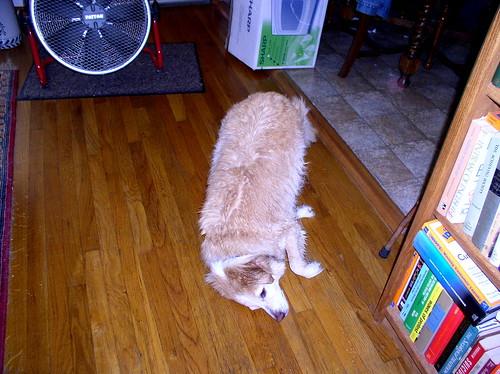 silly-dog