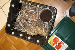 Compost Bin